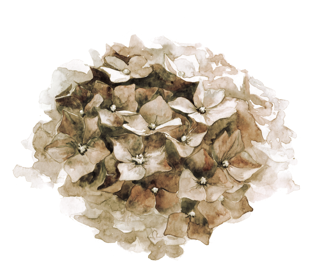 Moulin-de-Launoy-hortensia-mariage-fleurs-seminaire-entreprise-week-end-marron-beige