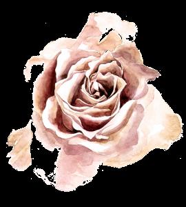 Moulin-de-Launoy-rose-sepia